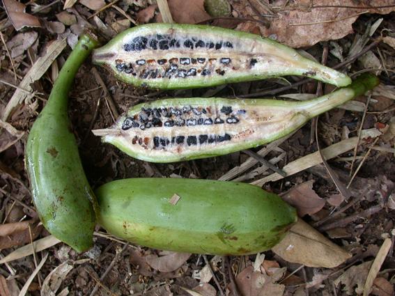 [Image: banana.png]