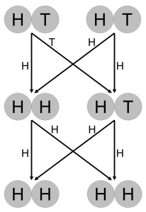 This is a simple illustration of the coin simulation. Each circle is an allele, and each pair is an individual. The lines show which allele gets passed. So the individual on the left in generation 1 happened to pass an H to one offspring and a T to the other, whereas the individual on the right randomly passed an H to each. As a result, the individual on the left in the second generation had two Hs and could not pass a T. The individual on the right could have passed a T, but two Hs were randomly selected instead, so by the third generation, H had become fixed, and the T allele was lost.